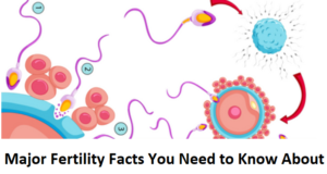 Major Fertility Facts You Need to Know About